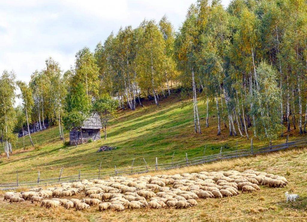 Drumeții în Transilvania