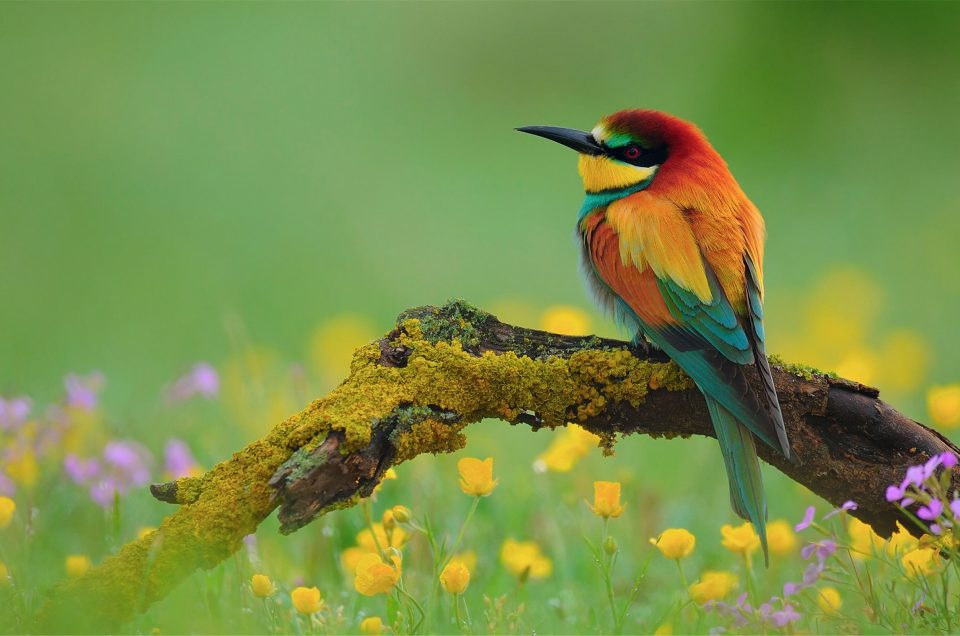 The most beautiful birds you can see in Romania